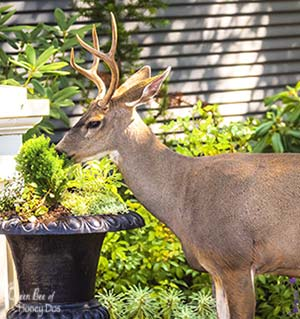 Plants Deer Love to Eat - feature