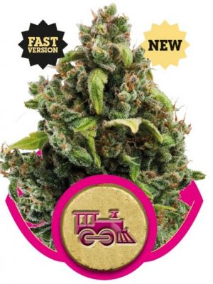 Candy Kush Express - Fast Version (Royal Queen Seeds), 3 feminisierte Samen