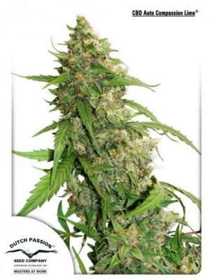 CBD Auto Compassion Lime von Dutch Passion