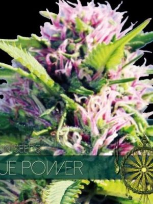 Blue Power von Vision Seeds