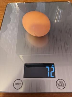 Muskelaufbau Ei