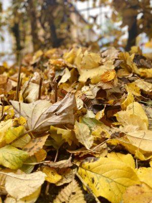 Blätterhaufen