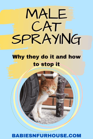 Male Cat Spraying