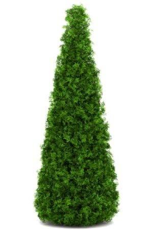 Thuja Smaragd 200-220 cm