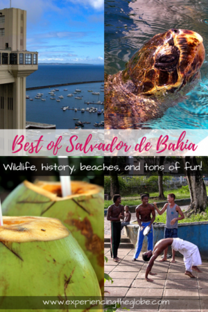 A trip thought to be all about drinking caipirinhas while sunbathing, ended up being about wildlife, history and architecture too. Brazil is so much more than drinks and beaches! – Experiencing the Globe #Salvador # SalvadorDaBahia #Brazil #SouthAmerica #Caipirinha #TravelExperiences #BeautifulDestinations #Wanderlust #MeetTheLocals