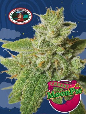 Cherry Moon Pie von Big Buddha Seeds