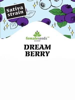 Dream-Berry-female-Seeds