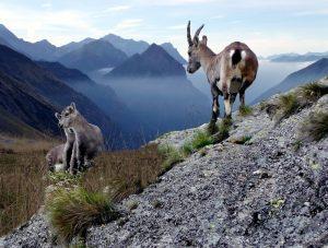 Pinterest Switzerland Travel Inspo