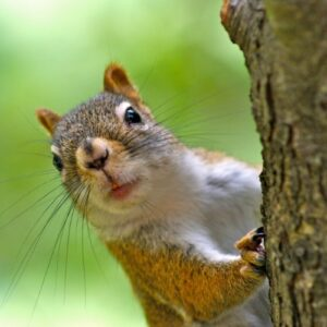 The Curious Squirrel saying a tentative hello!