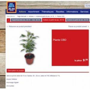 cbd plant aldi zwitserland