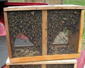 Ordering bees - is one task for any beekeeping business