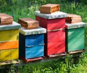 Learn how to paint beehives correctly to protect your investment.