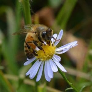 Avoid having dead beehives by making sure your colonies are healthy and well fed.