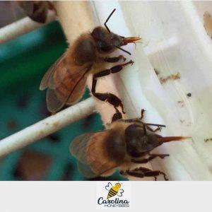bees feeding on sugar water in a bee feeder