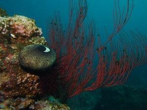 santa-cruz-island-reef