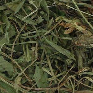 Premium Ribwort Plantain