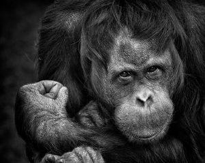 Monkey Fist not Knot