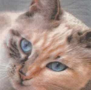 Serviette papier Chat brun 33 cm x 33 cm