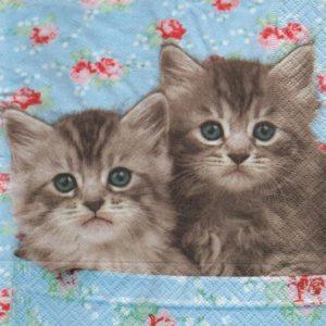 Serviette papier 2 petits chats 33 cm x 33 cm