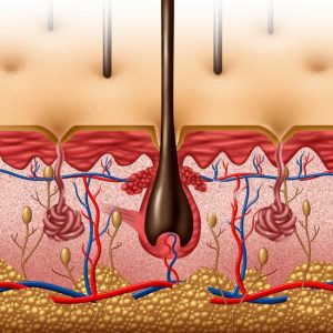 When hair falls out?When hair follicle is not properly nourished. In order to control hair fall, it is very important to ensure follicle is healthy and active