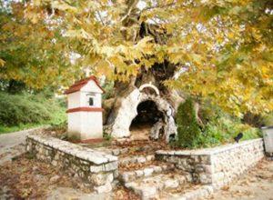 Crkva-u-drvetu.jpg