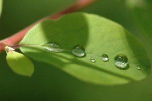 Achtsamkeit, eine-Spurensuche - Wassertropfen auf einem Blatt