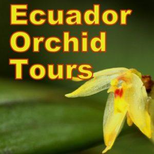 Ecuador Orchid Tours