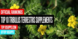 საუკეთესო Tribulus-Terrestris-დამატებების კი შეიძლება ყიდვა-ეს-წლიანი