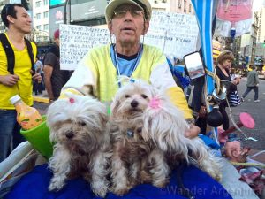 A man in Buenos Aires on his bicycle with three toy Maltese dogs