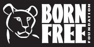 BFF logo CS 300x150 - Lion