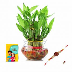 Rakhi Gift for Brother/ Sister Bonsai Plant Combo