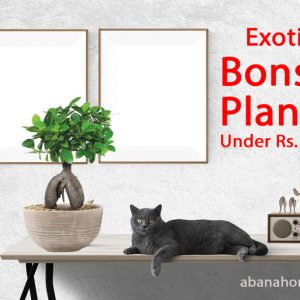 Bonsai Plants & Trees for Sale Under Rs. 1000