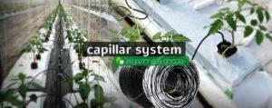 irrigazione con tubi capillari