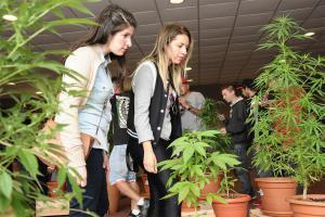 Expocannabis