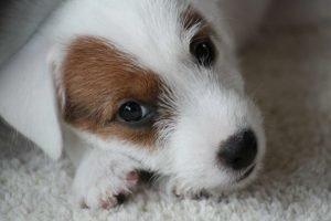 Welpenschule, der ideale Start ins Hundeleben