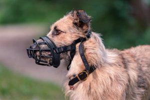Hunde Maulkorb Gewöhnen