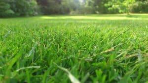 green lawn fresh cut
