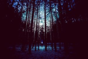 man in the woods at night