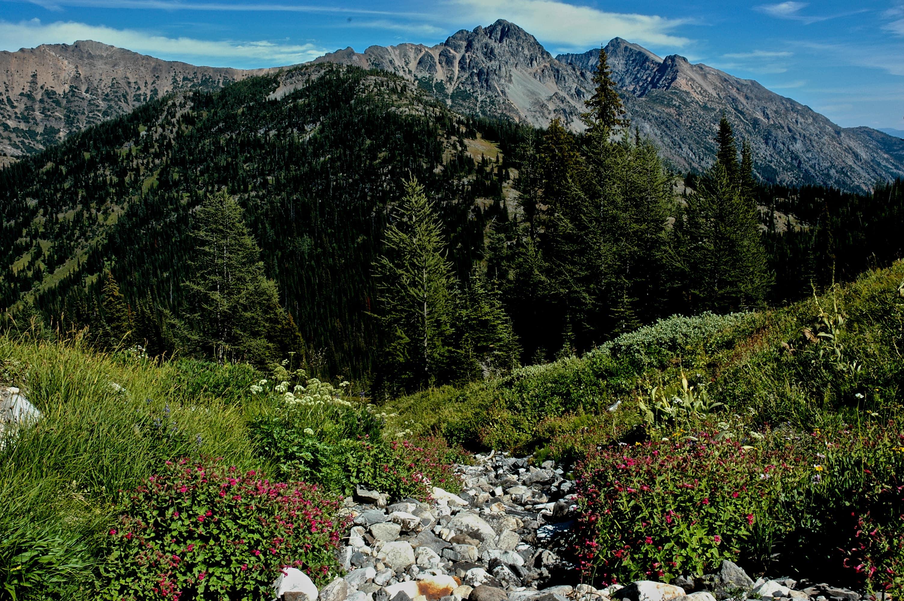 Pasayten Wilderness Area
