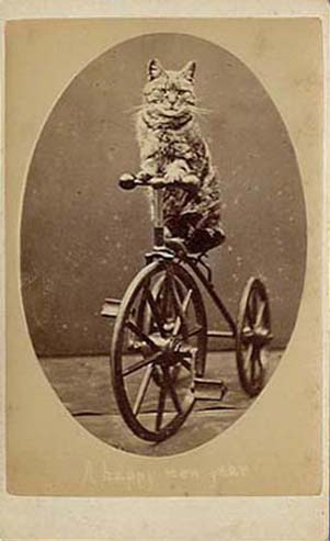 "Photograph of a cat sitting on a tricycle with ""A Happy New Year"". From Harry Pointer's Brighton Cats, public domain."