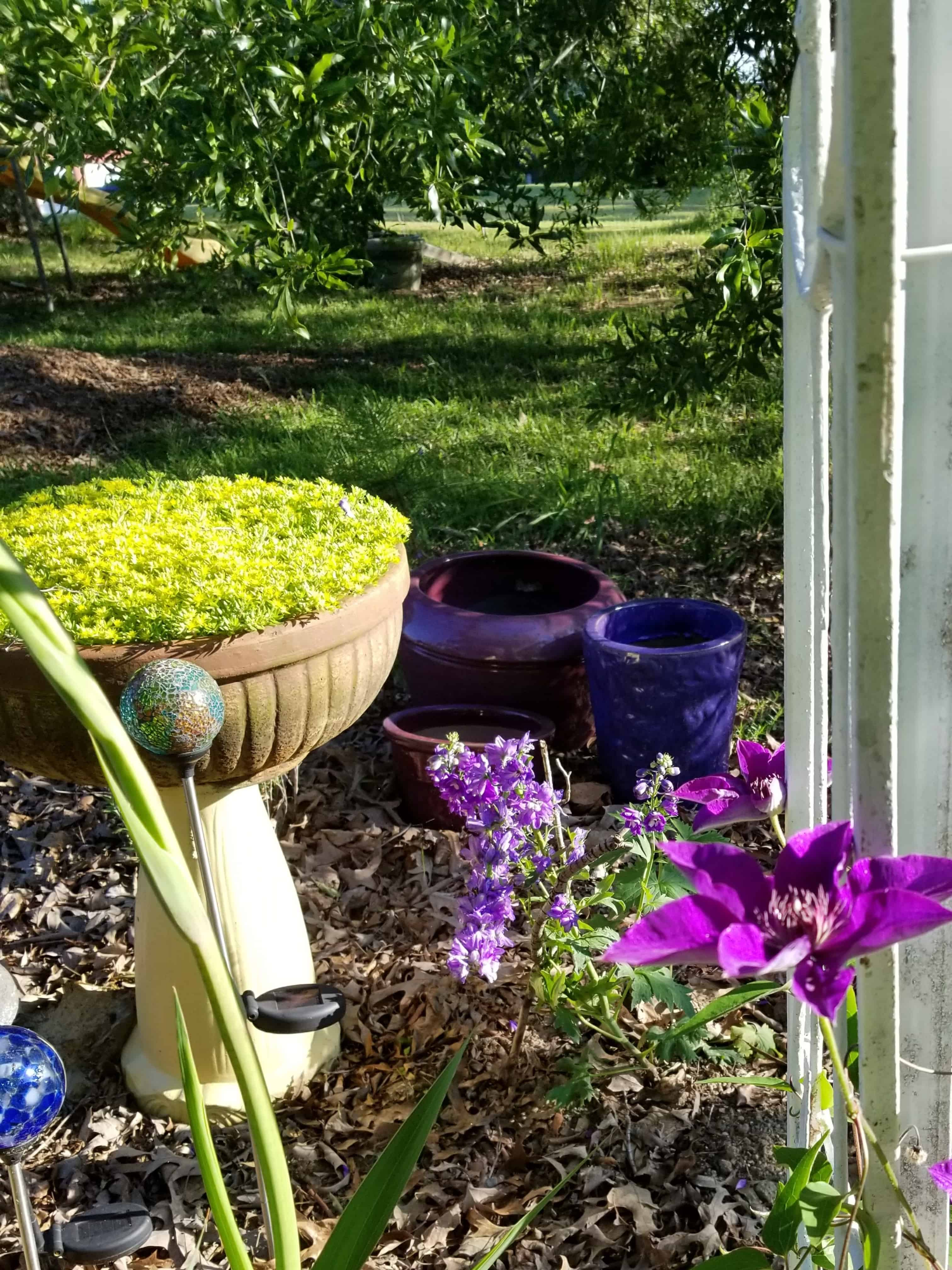 Recycle a cracked Birdbath into a planter