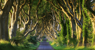 Film-Inspired Getaways for a Staycation in Ireland