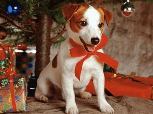 Как встречать Новый 2018 год Собаки: приметы?