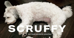 Scruffy Our Loyal Pandemic Pooches and the Good the Bad and the Crazy Haircuts We Gave Them