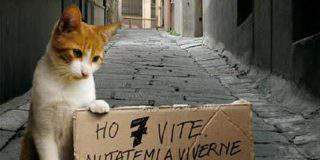 Avvelenati 70mila gatti
