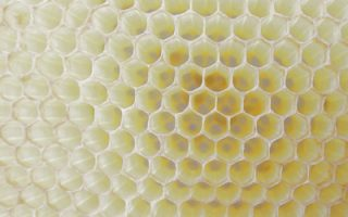 Where does beeswax come from? Bees of course. Carolina Honeybees