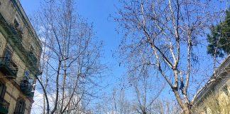 Potatura degli alberi