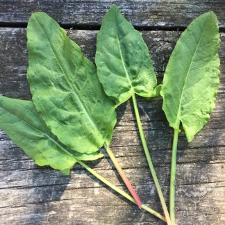French Sorrel