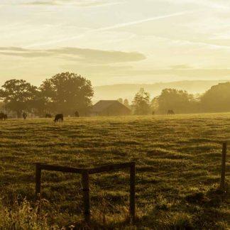 Western Maryland foggy sunrise at the mountain farm