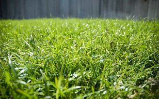 Best Weed Killers For Bermuda Grass